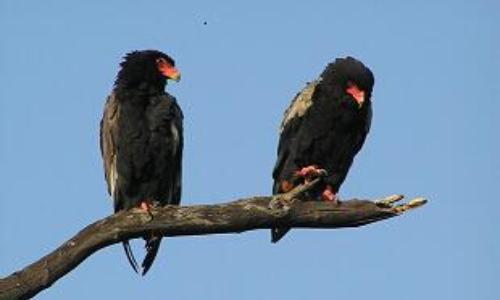 向上跳空的两只乌鸦形态